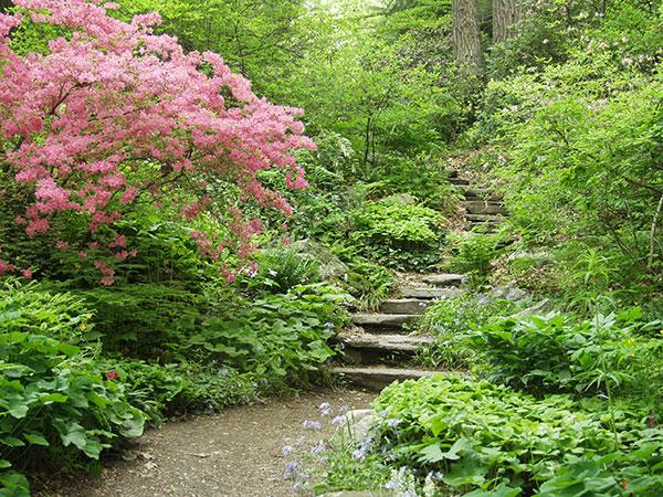gardeninthewoods_4